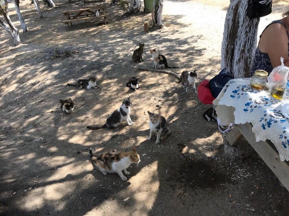 Katzen-Auflauf
